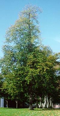 TCI-trees.jpg