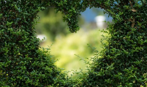 Greenery in the shape of a heart, stock photo