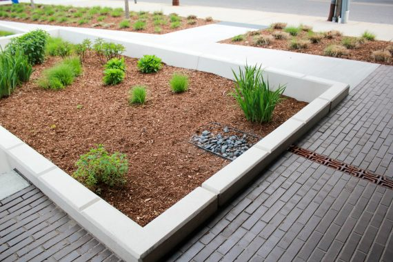 Rain garden and landscaping in front of 574 Boston Ave, CLIC Building